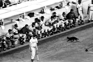 Cubs fans often blame this poor black cat for their 1969 collapse, but in reality the Mets went 79-39 after June 1st and beat the Cubs by eight games.