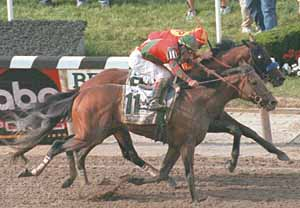 Real Quiet missed winning the triple crown by a nose to Victory Gallop (11) in the 1998 Belmont Stakes.