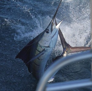 You can catch some amazing fish during a Florida fishing trip.