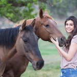 Owning a Horse – What You Need to Know