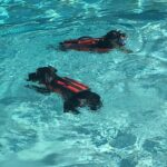 Can Swimming Help Dogs With Joint Problems?