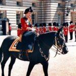 Royal Horse Racing: Meet the Queen's Horses